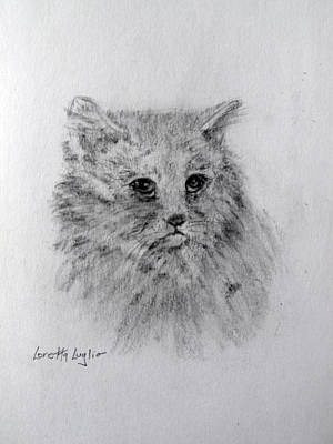 Drawing - Shelter Cat by Loretta Luglio