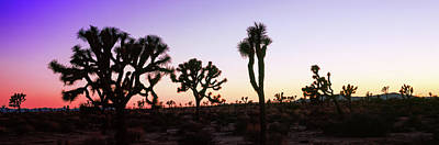 Silhouette Of Joshua Trees In A Desert Art Print