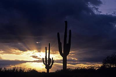 Silhouetted Saguaro Cactus Sunset At Dusk Arizona State Usa Art Print