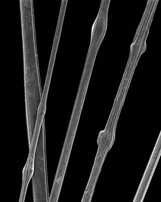 Pele Wall Art - Photograph - Silica Glass Hair by Dennis Kunkel Microscopy/science Photo Library