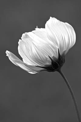 Simply Beautiful In Black And White Art Print by Penny Meyers