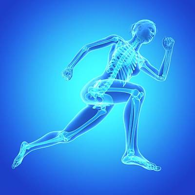 Skeletal System Of Jogger Art Print by Sebastian Kaulitzki