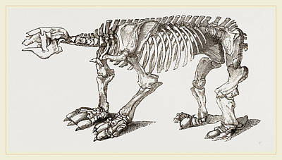 Skeleton Of Megatherium Art Print by Litz Collection