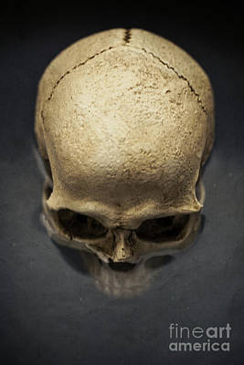 Human Head Photograph - Skull  by Edward Fielding
