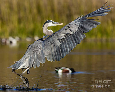 Irvine Photograph - Smooth Landing by Carl Jackson
