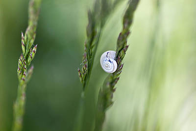 Invertebrates Photograph - Snail On Grass by Nailia Schwarz