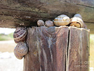 Photograph - Snails by Chani Demuijlder