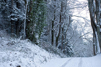 Bare Trees Photograph - Snow Covered Road Passing by Panoramic Images