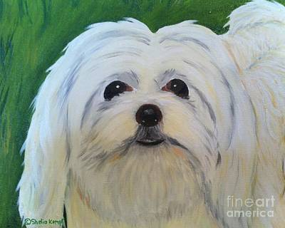 Art Print featuring the painting Snowball - Maltese Shih Tzu by Shelia Kempf