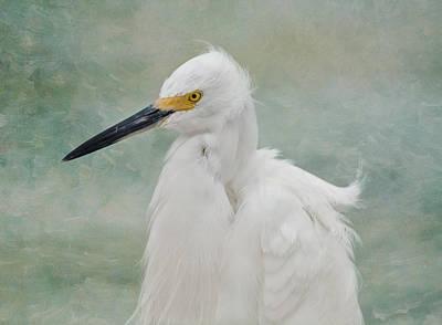 White River Photograph - Snowy Egret  by Kim Hojnacki