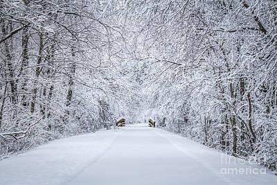 Snowy Path Art Print by Dawn M Smith