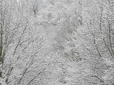 Photograph - Snowy Trees by Kathy Long