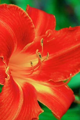 Digital Art - Red, Orange And Yellow Lily by Crystal Wightman