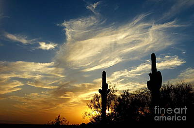 Photograph - Sonoran Desert by Mistys DesertSerenity