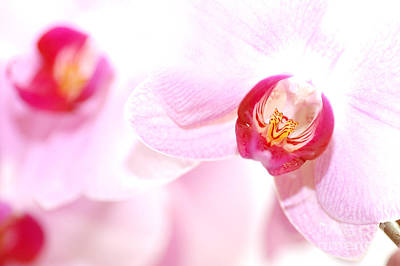 Scent Photograph - Spa Flowers by Michal Bednarek