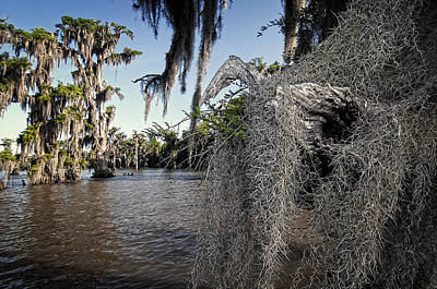 Spanish Moss Art Print by Andy Crawford
