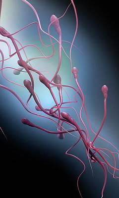 Sperm Cells Art Print