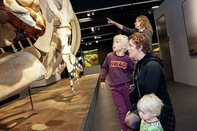 Caudal Photograph - Sperm Whale Skeleton Display by Thomas Fredberg