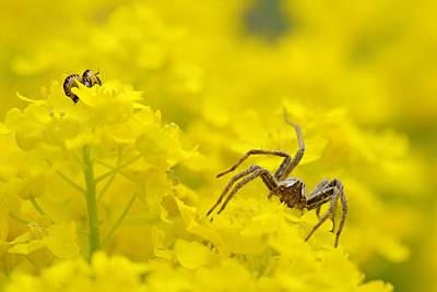 Photograph - Spider by Jaroslaw Grudzinski