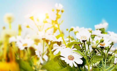 Spring Landscape Photograph - Spring Field With Flowers Daisy Herbs by Michal Bednarek