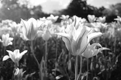 Photograph - Spring Garden by Miguel Winterpacht