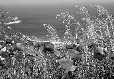 Black And White Photograph - Spring Poppies by George Atsametakis