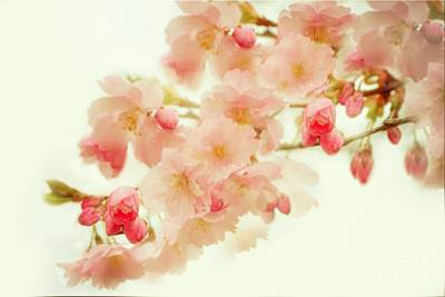Photograph - Spring by Sylvia  Niklasson