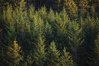 Spruce Tree Forest In Autumn, Kodiak Art Print
