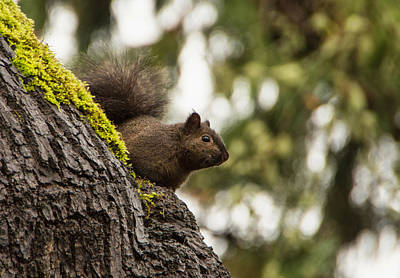 Photograph - Curious Squirrel by Marilyn Wilson