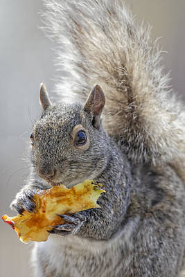 Photograph - Squirrel by Peter Lakomy
