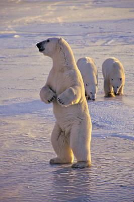 Photograph - Standing Bear by Randy Green