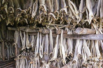 Stockfish, Norway Art Print by Dr Juerg Alean