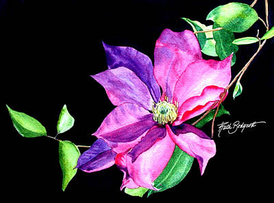 Clematis Painting - Striking Clematis by Ruth Bodycott