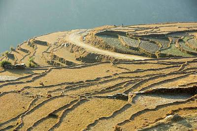 Terracing Photograph - Subsistence Farming by Ashley Cooper