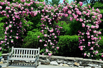 Photograph - Pink Rose Garden by Crystal Wightman