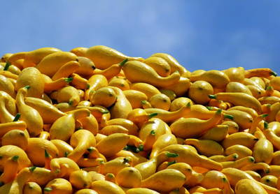 Vegetable Stands Photograph - Summer Squash by Karen Wiles