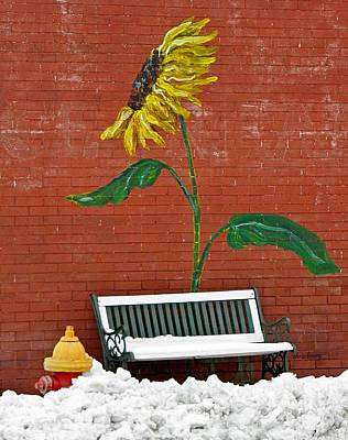 Sunflower And Snow Art Print by Chris Berry