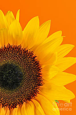 Still Life Royalty-Free and Rights-Managed Images - Sunflower closeup by Elena Elisseeva