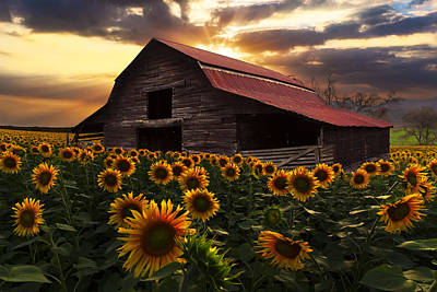 Red Roof Photograph - Sunflower Farm by Debra and Dave Vanderlaan