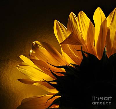 Sunflower Macro Print by Addie Hocynec