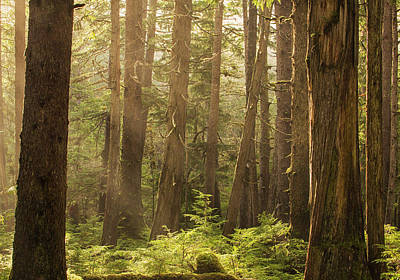 Haida Gwaii Photograph - Sunlight Streams Through The Rainforest by Robert Postma