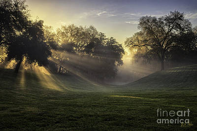 Sunrise Among The Oaks Art Print