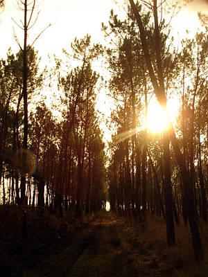 Sunrise Pin Tree Forest Art Print by Michel Mata