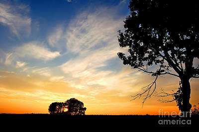Backgrounds Photograph - Sunset And Trees by Michal Bednarek