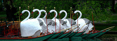 Photograph - Swans All In A Row by Caroline Stella