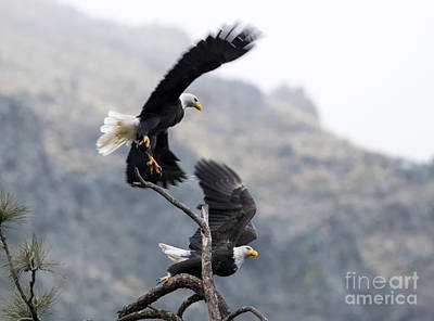Eagle Photograph - Take Flight by Mike Dawson