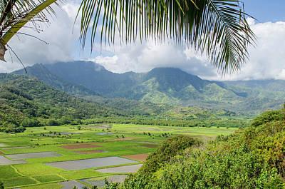 Hanalei Photograph - Taro Fields In Hanalei National by Michael Defreitas