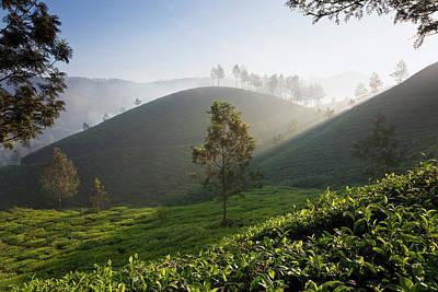 Tea Plantations, Munnar, Western Ghats Art Print by Peter Adams