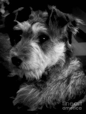 Photograph - Terrier  by Karen Lewis