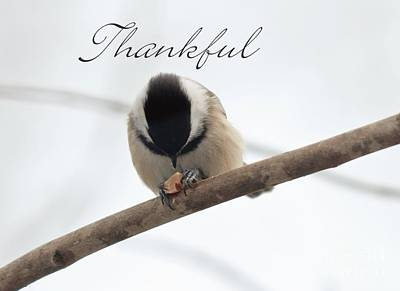 Photograph - Thankful by Cheryl Baxter